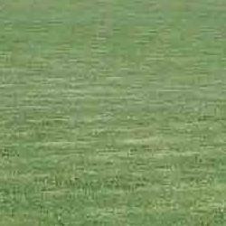 campo de futbol y fronton